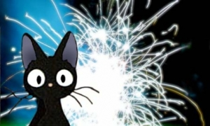 Cats hate fireworks!