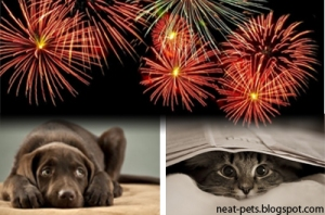 Is Your Cat Or Dog Afraid of Fireworks?